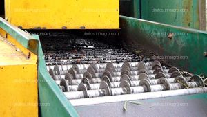 Transporte de aceitunas en lavadora