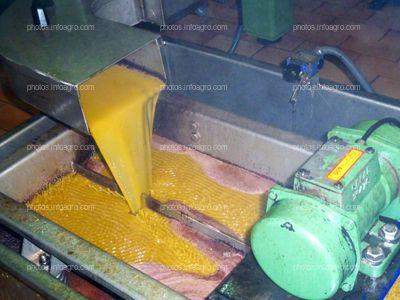 Elaboración de aceite de oliva