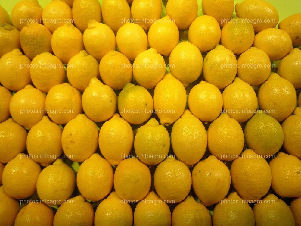 Limones sanos recolectados