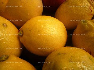 Limón Citrus limón L
