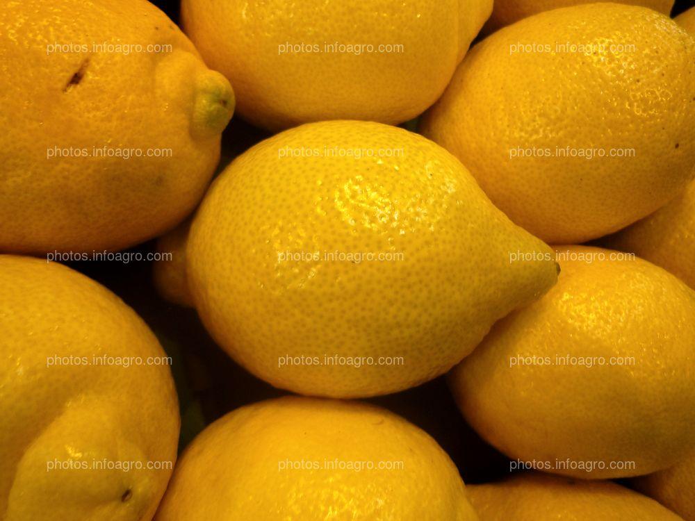 Limones frescos para comercialización