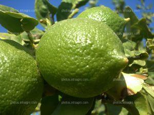 Limón inmaduro