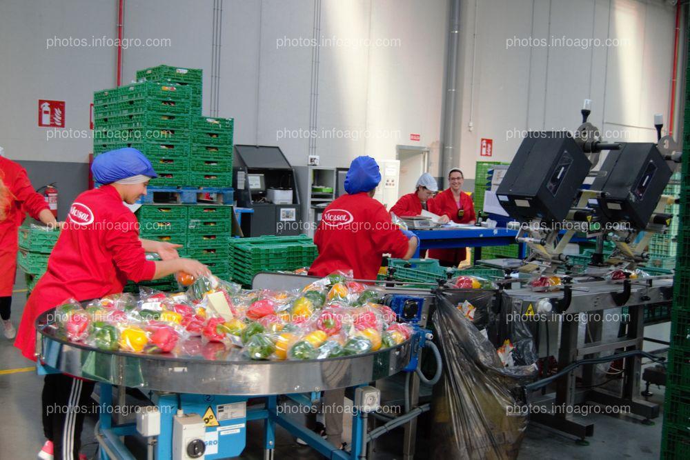 Personal de Vicasol 3 El Ejido, envasando productos
