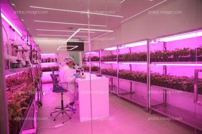 Personal de Kimitec Group, investigando con plantas