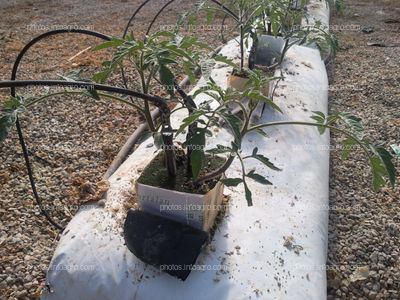 Saco de cultivo sin suelo