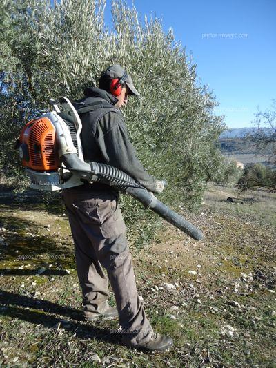 Labores de olivar