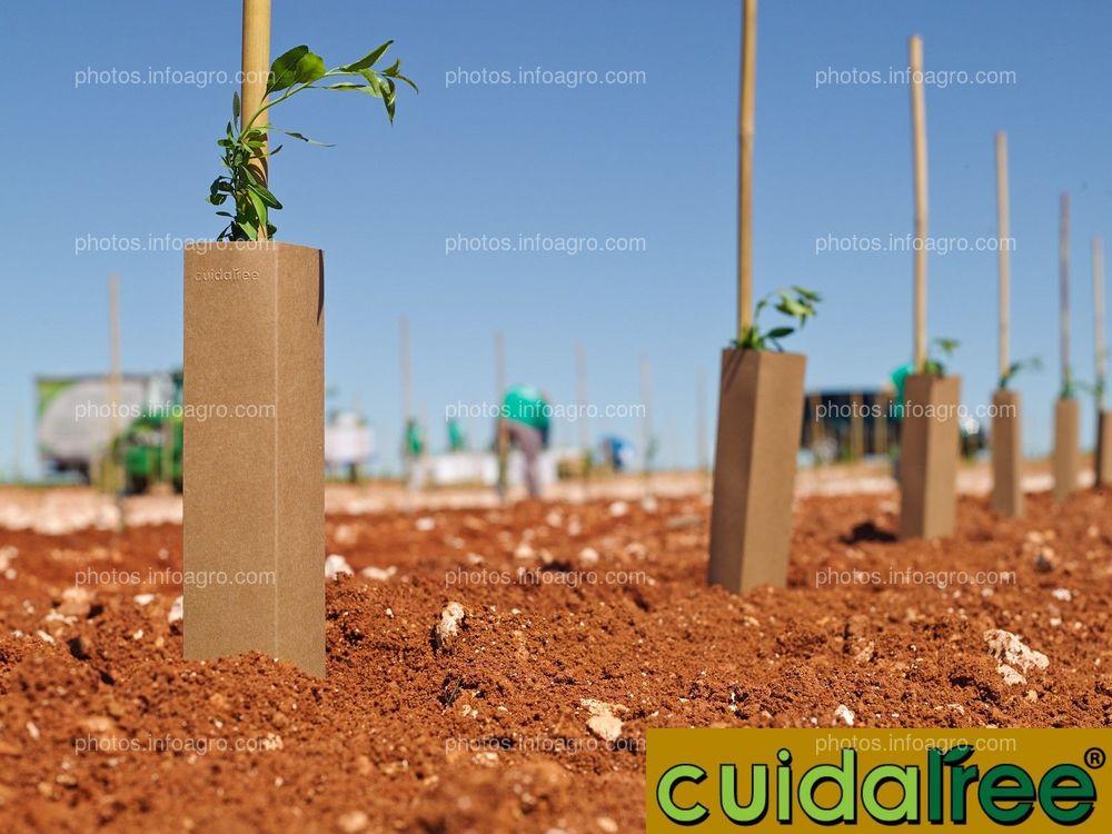 Cuidatree Protectores Ecológicos para árboles y plantas