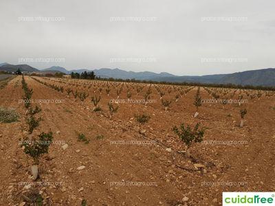 Plantación de Frutales en Barranda