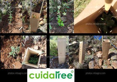 Cuidatree en Reforestación