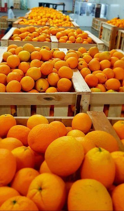 Naranja Marruecos