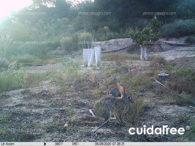 Cuidatree, Protector contra conejos