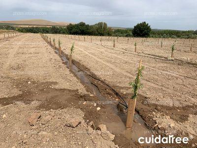 Plantación en Torreblascopedro provincia de Jaén