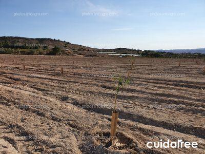 Plantación en Orito (Alicante)