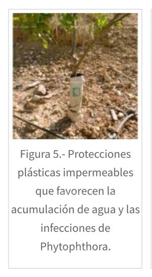 ¿Conoces los inconvenientes de las protecciones de plástico para tus cultivos?