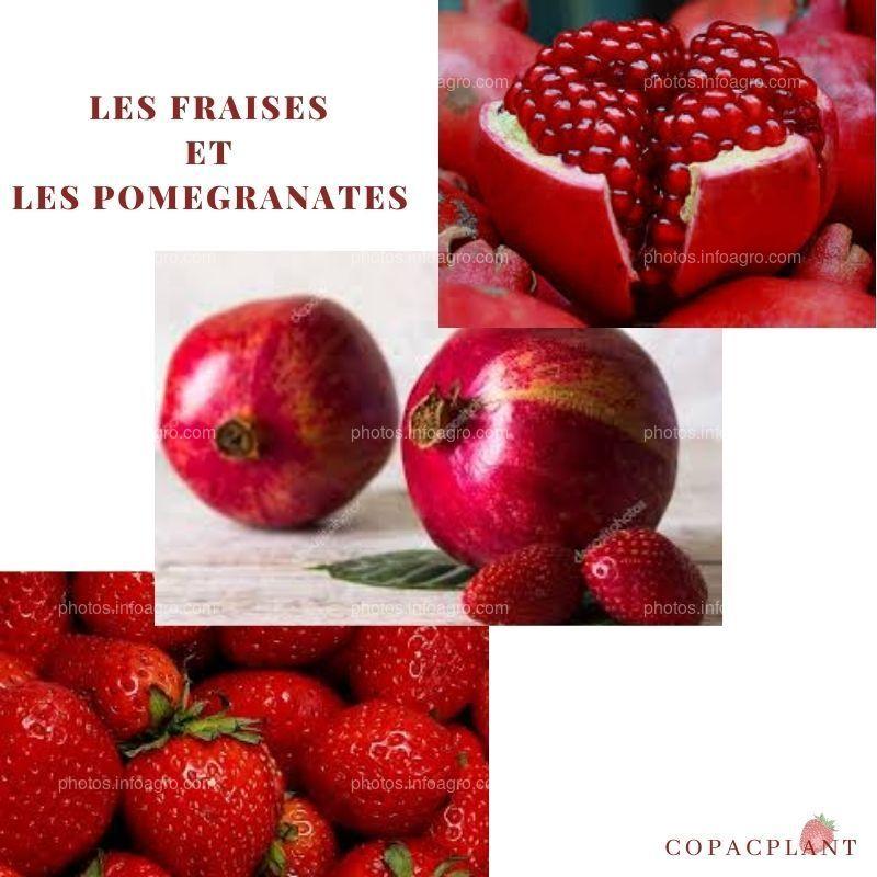 fresa y granada
