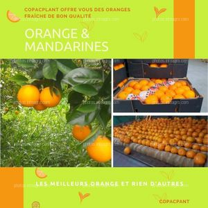Naranja marroquí