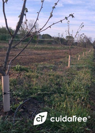 Finca de frutales en Brunyola, provincia de Girona
