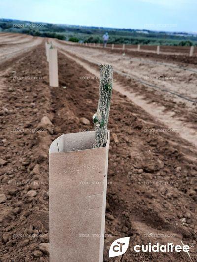 Plantación en Alcolea del Río Provincia de Sevilla