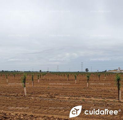 Finca La Nava Grande ubicada en Carmona provincia de Sevilla