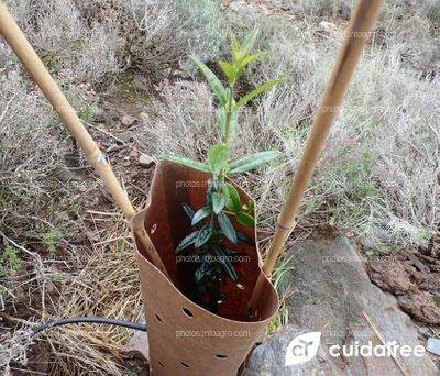 Protectores de Arbustos