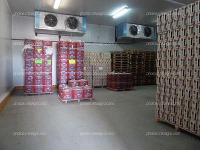 Cámara frigorífica para la conservación de las fresas