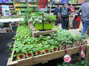 Plantas de hortalizas para cultivo doméstico en Iberflora 2019