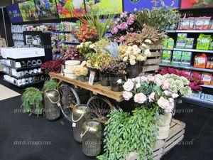Flores para decoración del hogar, expuestas en Iberflora 2019