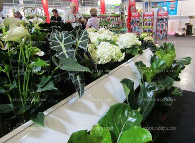 Hortensias blancas y Anthurium blanca junto a otras plantas ornamentales expuestas en Iberflora 2019