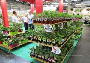 Hortalizas para el cultivo doméstico expuestos en el stand de Fitoralia en Iberflora 2019