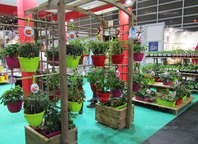 Hortalizas para cultivo doméstico en el stand de Fitoralia