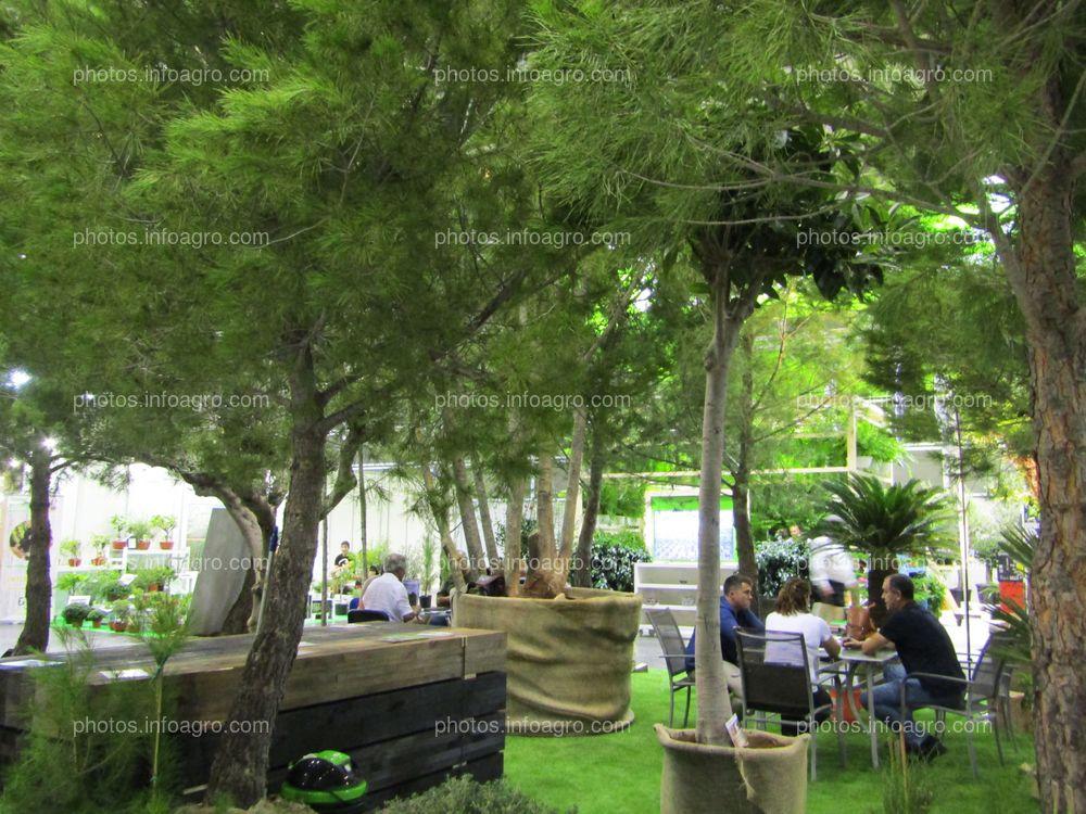Coníferas para cultivo en jardín, expuestas en Iberflora 2019