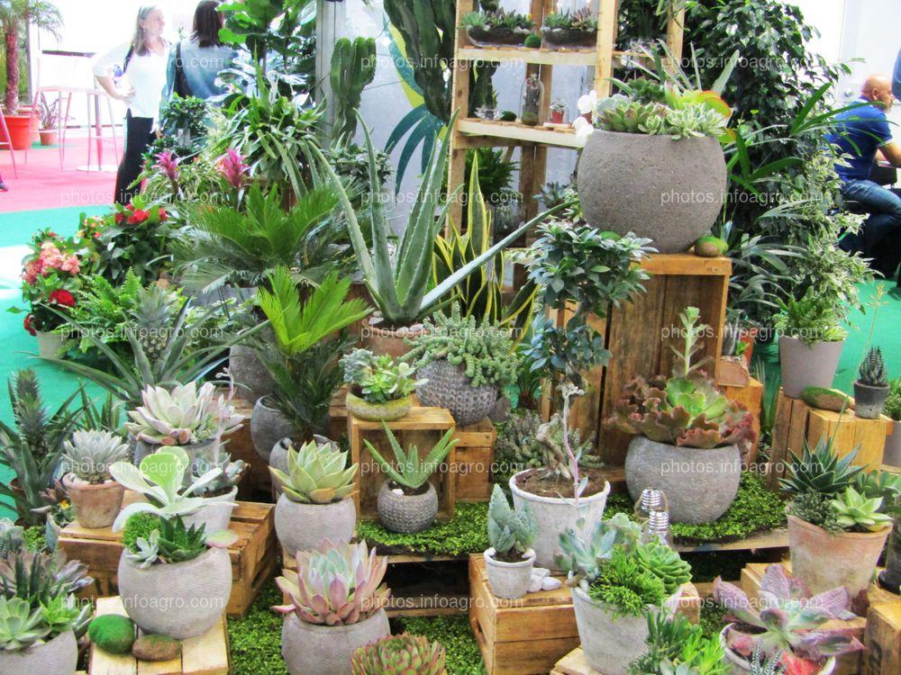 Cáctus, suculentas y plantas ornamentales expuestas en Iberflora 2019