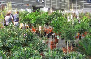 Árboles frutales para cultivo doméstico expuestos en Iberflora 2019