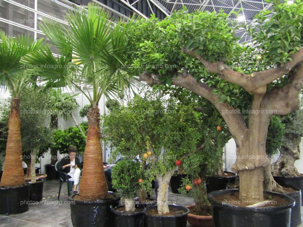 Árboles frutales y palmeras ornamentales para jardín, expuestos en Iberflora 2019