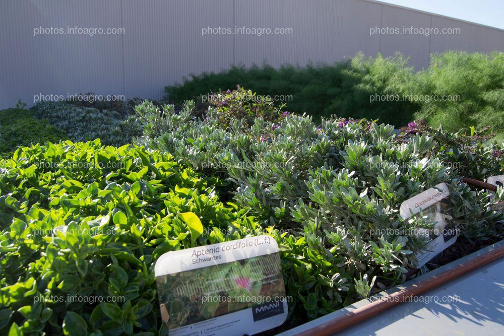 Especies aromáticas, utilizadas por Kimitec en su parte de botánica, para despertar los sentidos del visitante
