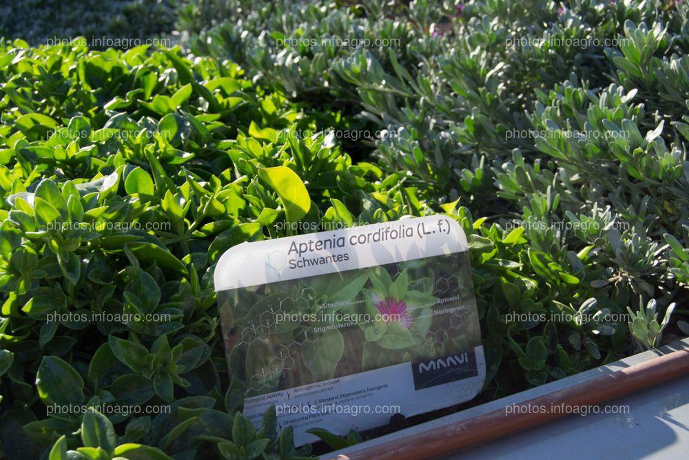 Cada especie cuenta con un cartel en el que se indican los principios activos que contiene cada planta