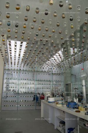 Numerosos botes con muestras de especies botánicas cuelgan del techo del laboratorio de botánica del MAAVi de Kimitec, junto a las bombillas que alumbran la estancia