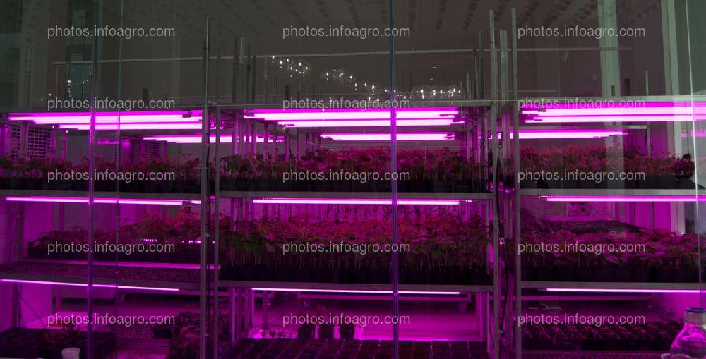 Sala de ensayos, contigua al laboratorio de botánica del MAAVi de Kimitec